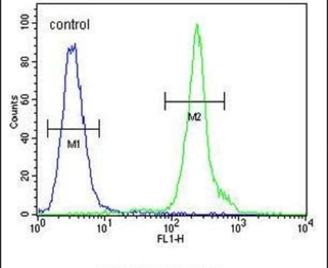 ZBBX Rabbit anti-Human, Polyclonal, Invitrogen 400 µL; Unconjugated