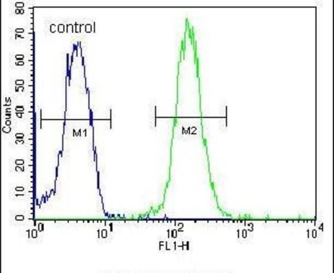 ZBTB10 Rabbit anti-Human, Polyclonal, Invitrogen 400 µL; Unconjugated