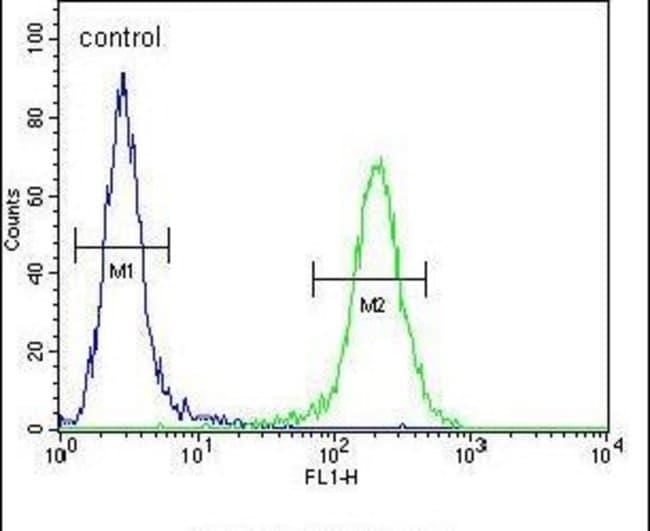 ZDHHC2 Rabbit anti-Human, Mouse, Polyclonal, Invitrogen 400 µL; Unconjugated