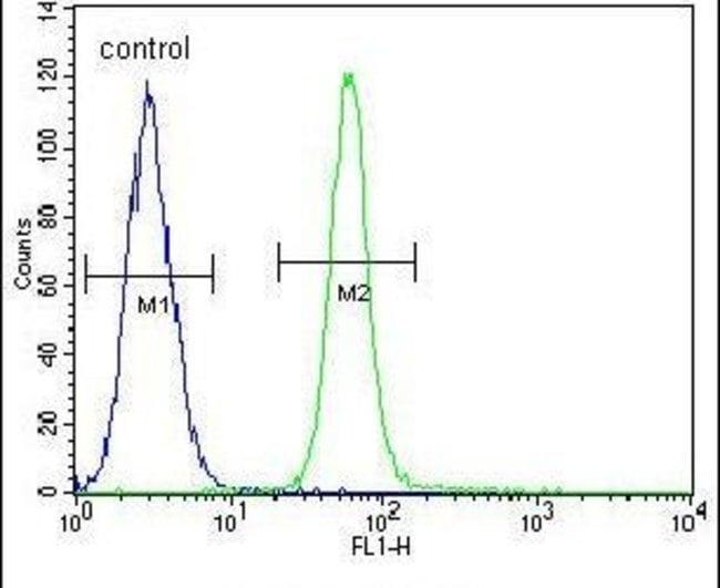 ZMYND10 Rabbit anti-Human, Mouse, Polyclonal, Invitrogen 400 µL; Unconjugated