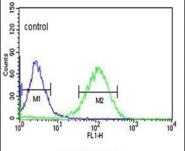 ZNF202 Rabbit anti-Human, Polyclonal, Invitrogen 400 µL; Unconjugated