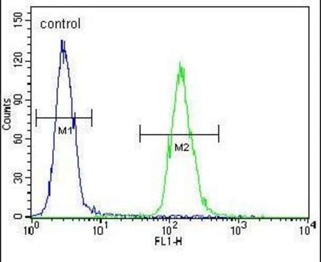 ZNF536 Rabbit anti-Human, Polyclonal, Invitrogen 400 µL; Unconjugated