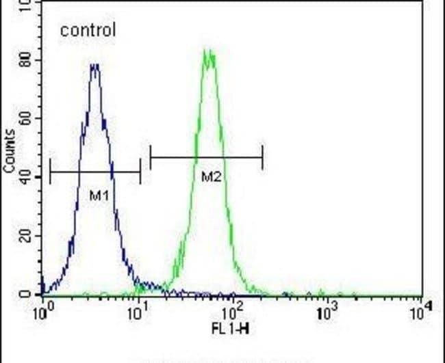 ZNF611 Rabbit anti-Human, Polyclonal, Invitrogen 400 µL; Unconjugated
