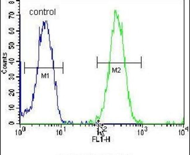 ZNF780A Rabbit anti-Human, Polyclonal, Invitrogen 400 µL; Unconjugated
