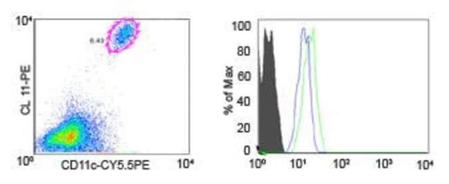 CCR1 Rabbit anti-Human, Mouse, Polyclonal, Invitrogen 100 µg; Unconjugated