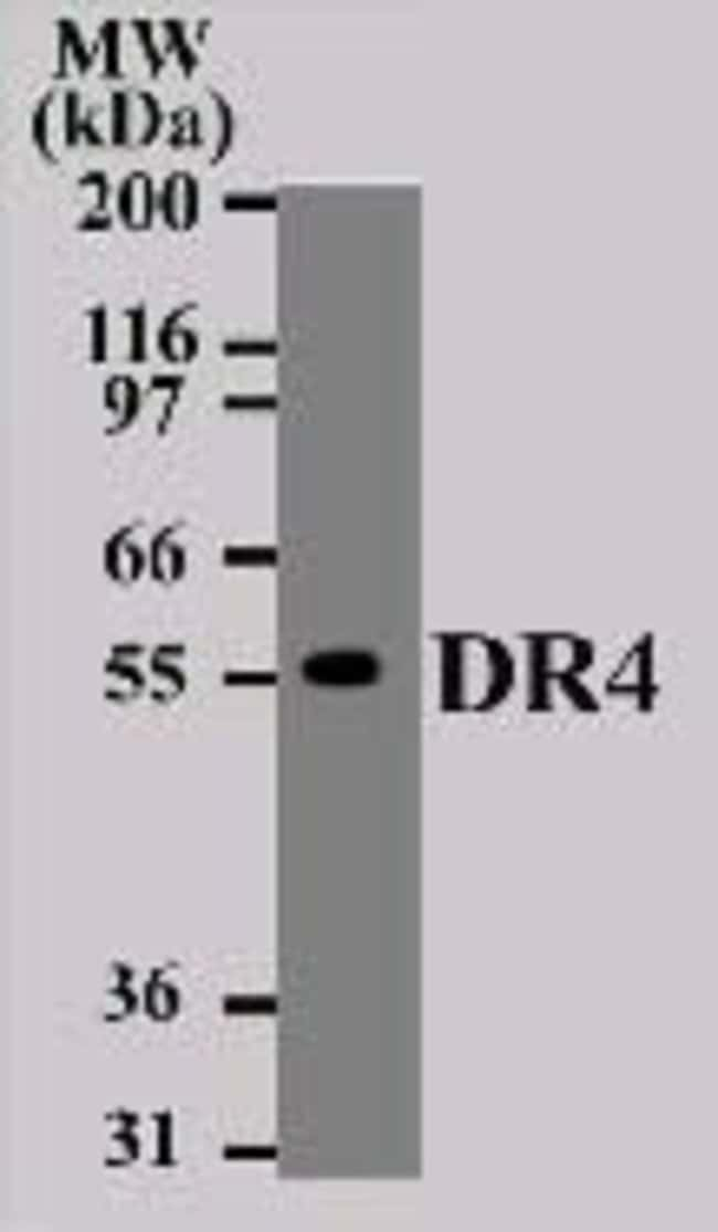 DR4 Mouse anti-Human, Clone: 32A1380, Invitrogen 100 µg; Unconjugated