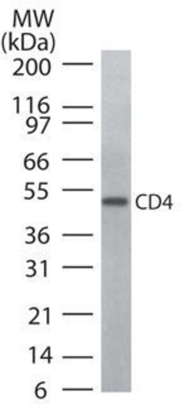 CD4 Rabbit anti-Human, Non-human primate, Polyclonal, Invitrogen 100 μg;