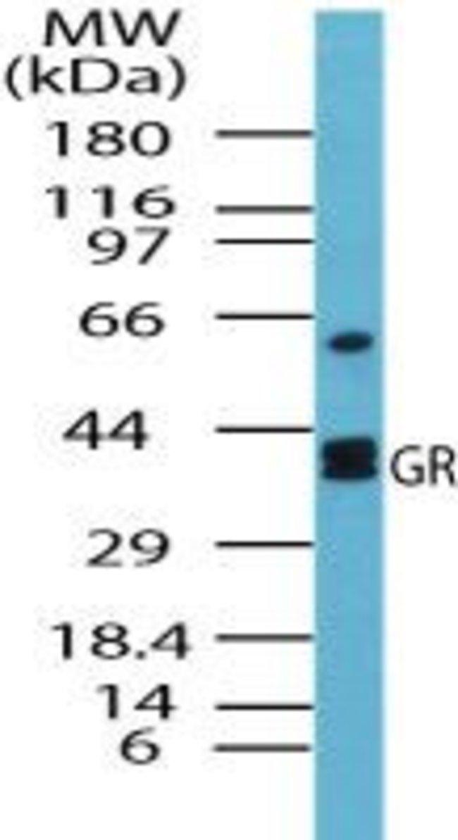 GSR Rabbit anti-Human, Yeast, Polyclonal, Invitrogen 100 µg; Unconjugated