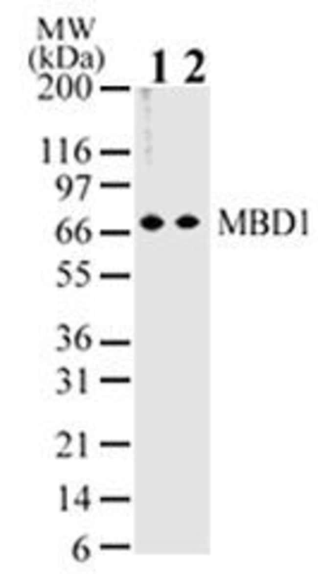 MBD1 Mouse anti-Human, Mouse, Clone: 100B272.1, Invitrogen 100 µg;