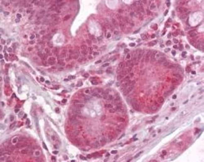 Raptor Rabbit anti-Human, Mouse, Polyclonal, Invitrogen 200 μL; Unconjugated:Antibodies