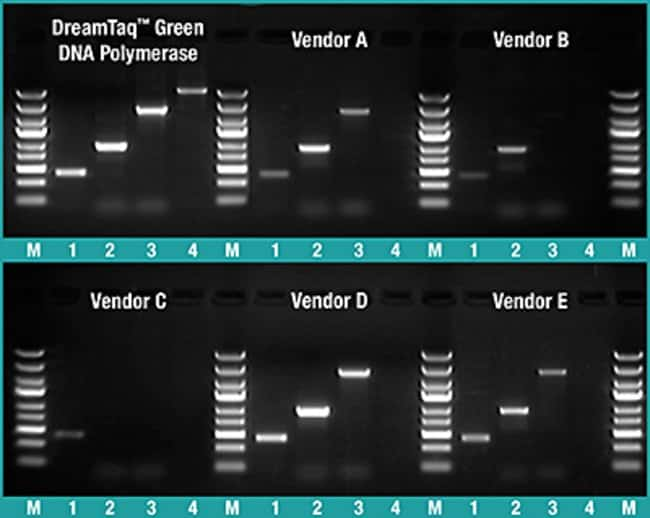 Thermo Scientific™DreamTaq Green PCR Master Mix (2X) Promotion: PCR Reagents and Kits PCR and qPCR