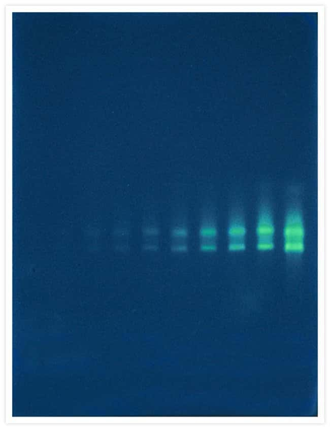 Invitrogen™SYBR™ Green II RNA Gel Stain, 10,000X concentrate in DMSO: Biochemicals and Reagents Life Sciences