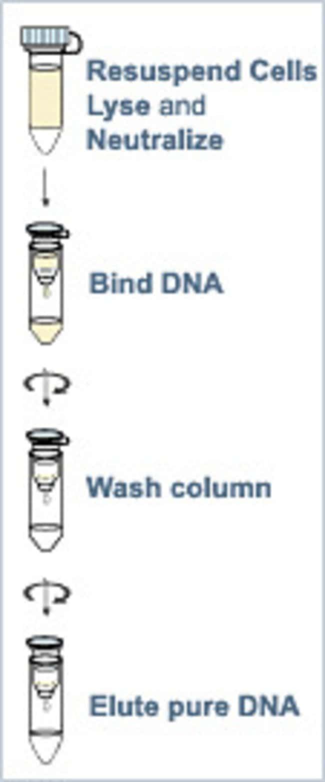 Thermo Scientific™Kit de préparation de plasmide mini GeneJET™: Bioréactifs Sciences de la vie