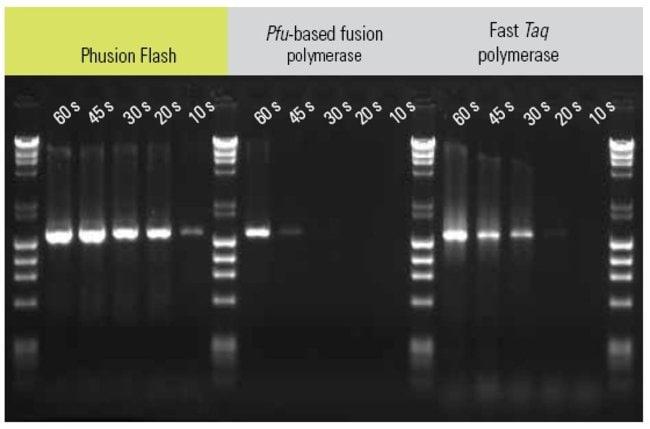 Thermo Scientific™Master Mix PCR haute fidélité Phusion Flash: Bioréactifs Life Sciences