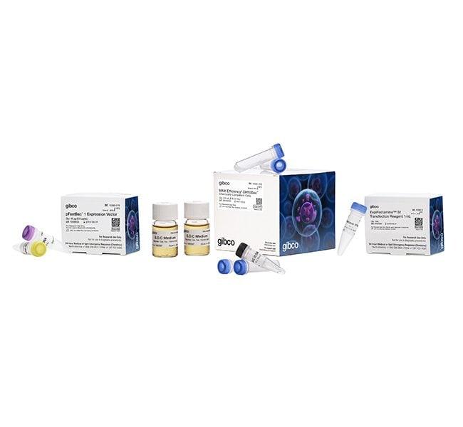 Invitrogen Bac-to-Bac Baculovirus Expression System   1 kit:Life Sciences