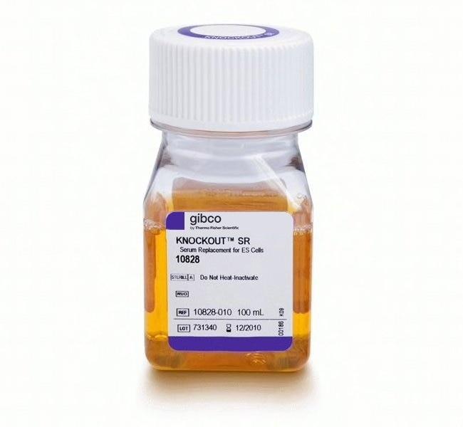 GibcoKnockOut Serum Replacement 100mL:Antibiotics and Supplements