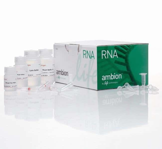 Invitrogen PureLink RNA Mini Kit   250 preps:Life Sciences