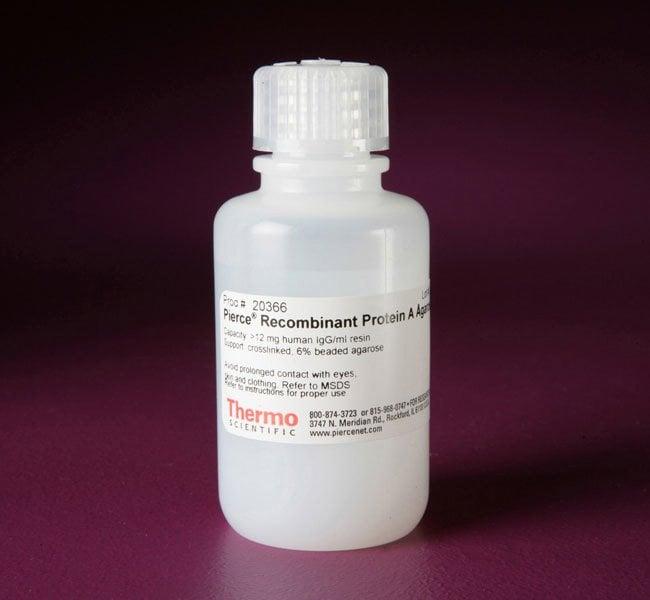 Thermo Scientific™Pierce™ Recombinant Protein A Agarose Resin; 25mL Thermo Scientific™Pierce™ Recombinant Protein A Agarose