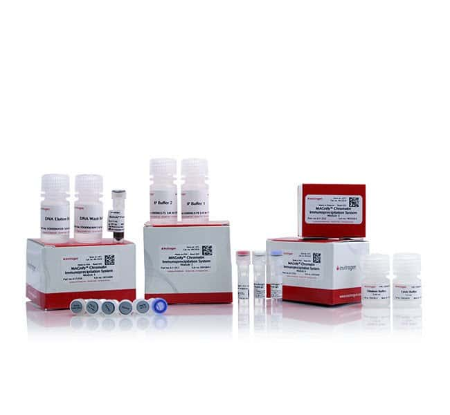 Invitrogen MAGnify Chromatin Immunoprecipitation System  24 Reactions:Life