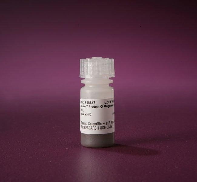 Thermo Scientific™Pierce™ magnetische Beads ProteinG Magnetische Protein G-Beads; 1ml Thermo Scientific™Pierce™ magnetische Beads ProteinG