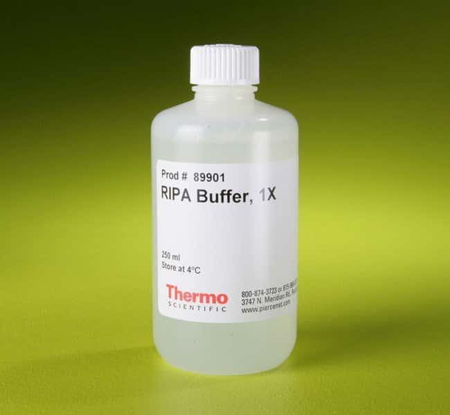 Thermo Scientific RIPA Lysis and Extraction Buffer  250mL:Life Sciences