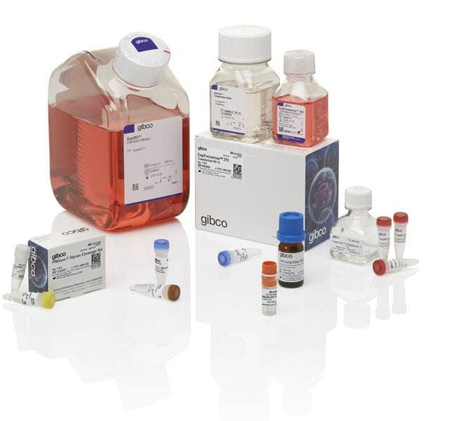 Gibco™Expi293™ Inducible GnTI- Expression System Kit
