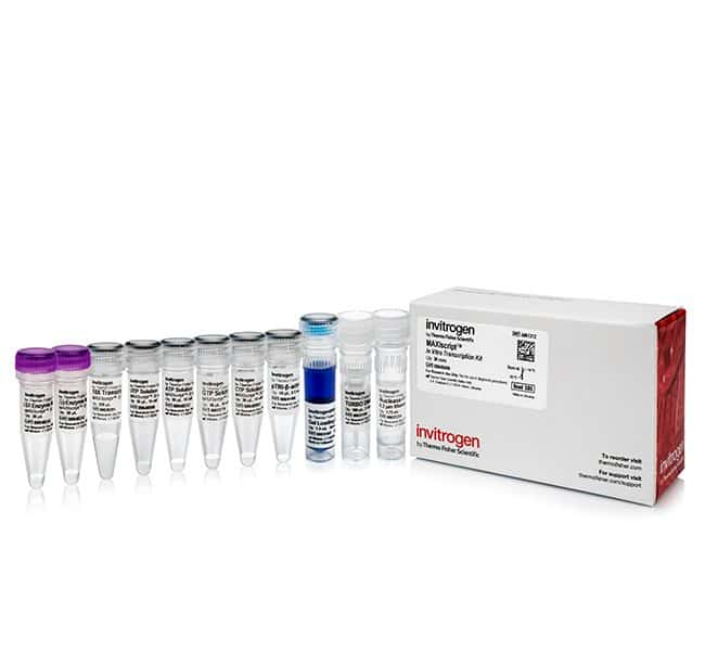Invitrogen™ MAXIscript™ T7 Transcription Kit 100 reactions Invitrogen™ MAXIscript™ T7 Transcription Kit