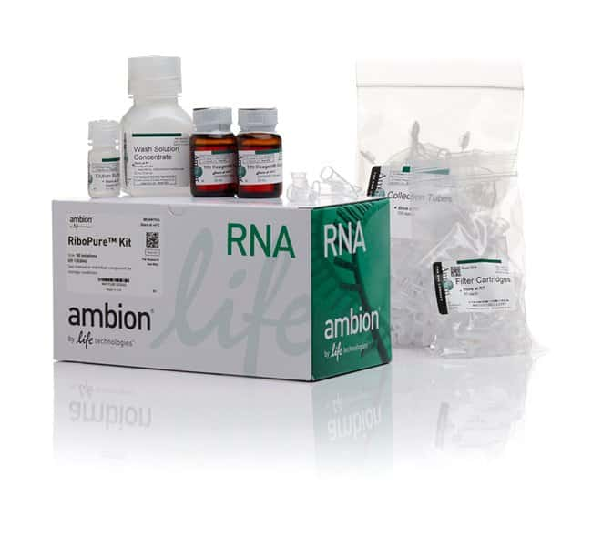 Invitrogen™RiboPure™ RNA Purification Kit Kit Invitrogen™RiboPure™ RNA Purification Kit