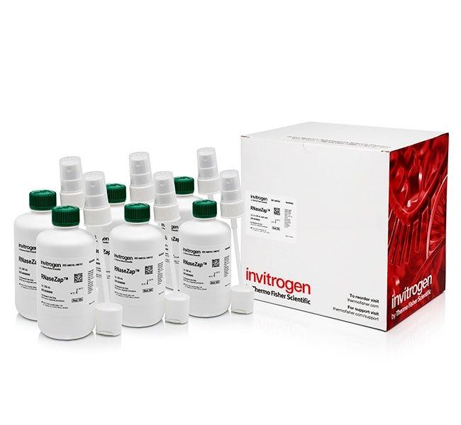 Invitrogen RNaseZap RNase Decontamination Solution   6 x 250mL:Life Sciences