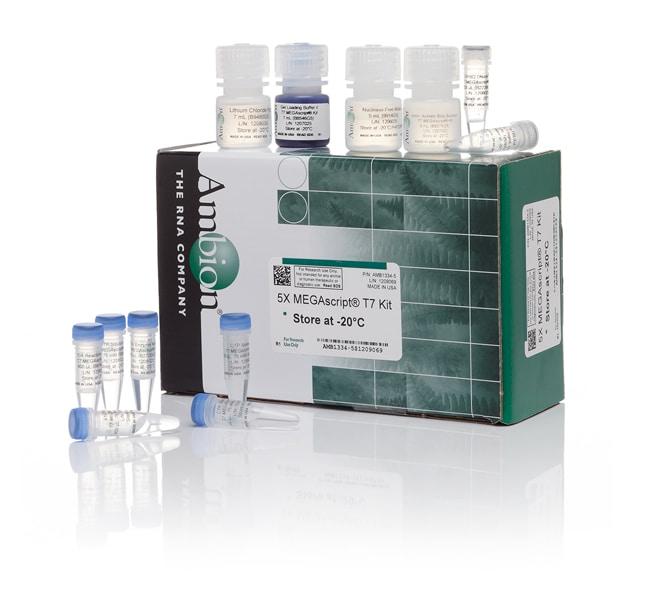 Invitrogen™MEGAscript™ T7 Transcription Kit 200 reactions Invitrogen™MEGAscript™ T7 Transcription Kit