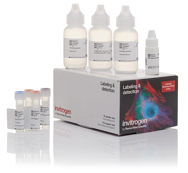 Invitrogen™Alexa Fluor™ 594 Tyramide SuperBoost™ Kit, Chèvre anti-IgG de souris Pour 150 lames de microscope (18  x 18 mm) Invitrogen™Alexa Fluor™ 594 Tyramide SuperBoost™ Kit, Chèvre anti-IgG de souris