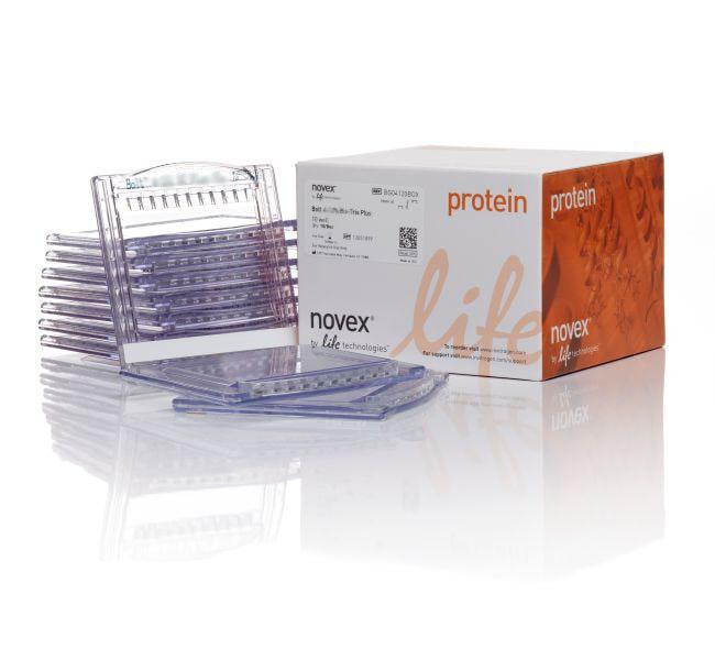 Invitrogen™Bolt™ 4 to 12%, Bis-Tris, 1.0 mm Mini Protein Gel, 12-well