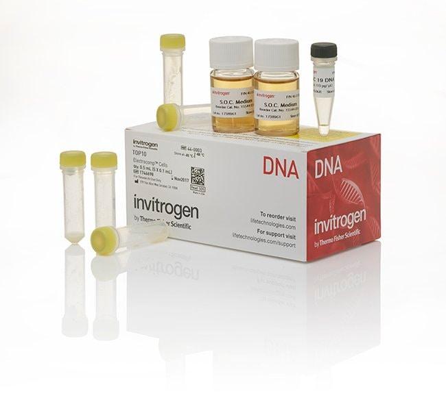 Invitrogen TOP10 Electrocomp Kit  :Life Sciences:Life Science Equipment