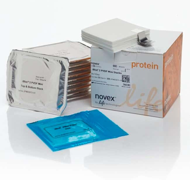 Invitrogen™ iBlot™ 2 Transfer Stacks, PVDF, mini