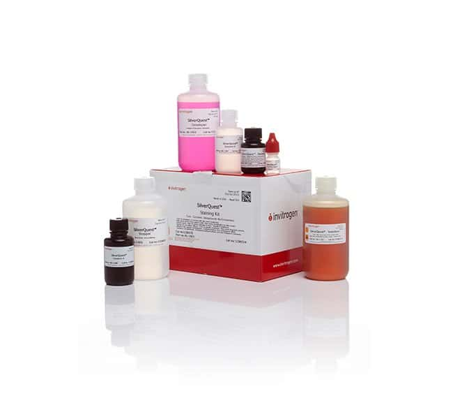 Invitrogen SilverQuest Silver Staining Kit   Silver Stain Kit:Electrophoresis,