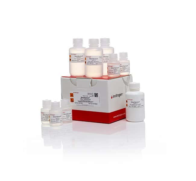 Invitrogen SilverXpress Silver Staining Kit   Silver Stain Kit:Electrophoresis,