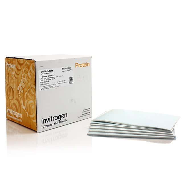 Invitrogen Power Blotter Pre-cut Membranes and Filters, PVDF, regular size