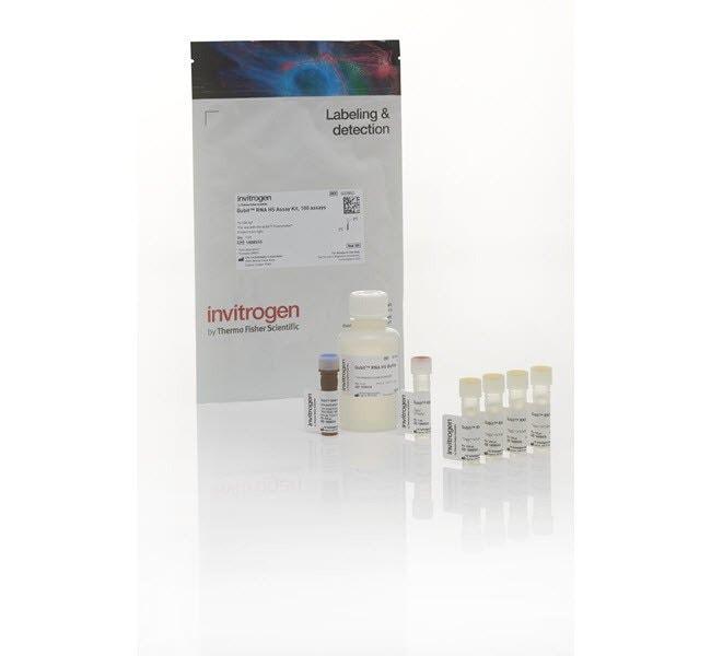 Invitrogen™Qubit™ RNA HS Assay Kit 100 assays Invitrogen™Qubit™ RNA HS Assay Kit