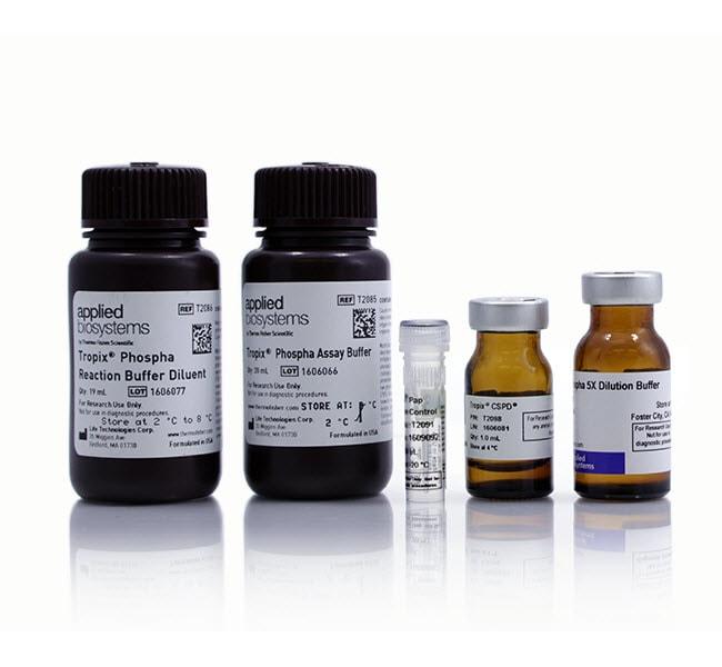 Invitrogen™Phospha-Light™ SEAP Reporter Gene Assay System Quantity: 400 assays products