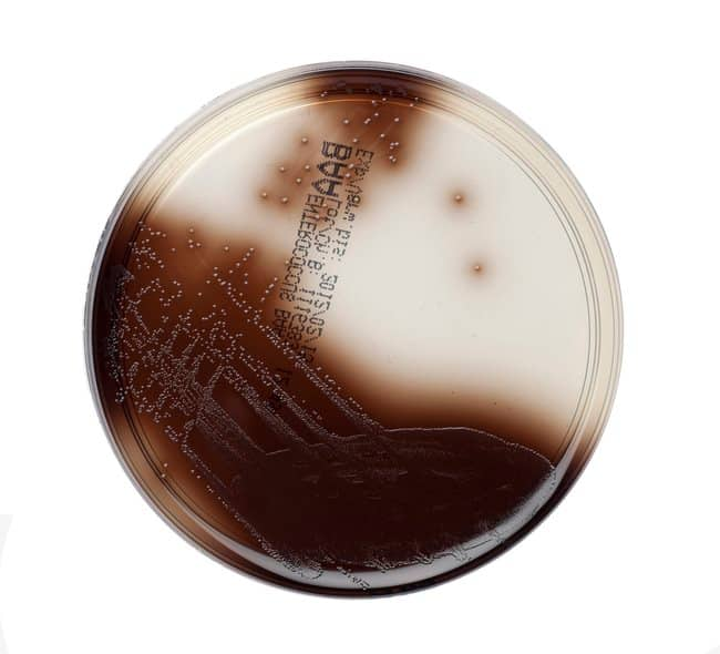 Thermo Scientific Bile Esculin Azide Agar :Life Sciences:Microbiology