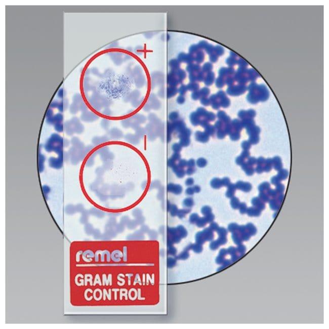 Thermo Scientific Remel QC-Slide Gram Stain Control  45/Pk.:Life Sciences