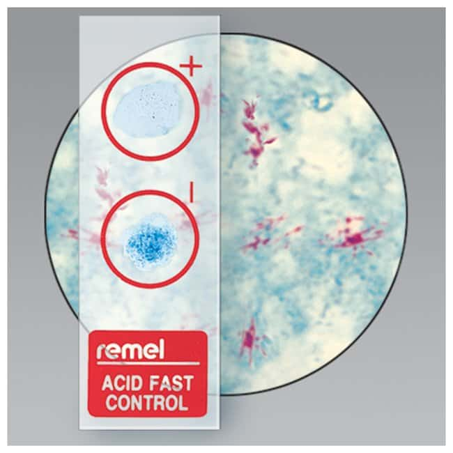 Thermo Scientific Remel QC-Slide AFB Stain Control :Life Sciences:Microbiology