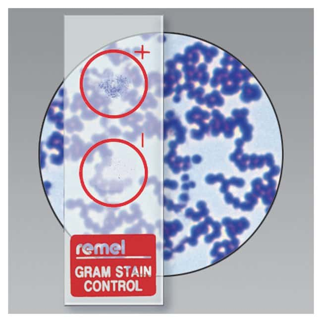 Thermo Scientific Remel QC-Slide Gram Stain Control  10/Pk.:Life Sciences
