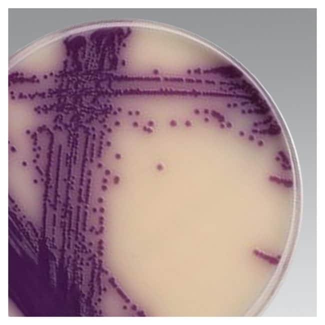 Thermo Scientific™Brilliance™ Salmonella Agar Base 500g Chromatography and PCR