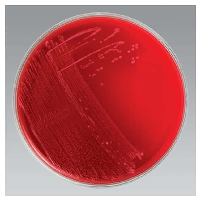 Thermo Scientific Remel Anaerobic Blood Agar, Monoplate :Life Sciences:Microbiology