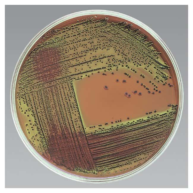 Thermo Scientific Levine EMB Agar Spacesaver Plate; 15/Pack:Life Sciences