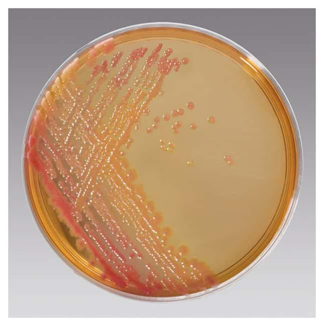 Thermo Scientific Remel Salmonella Shigella Agar (SS Agar) :Life Sciences:Microbiology
