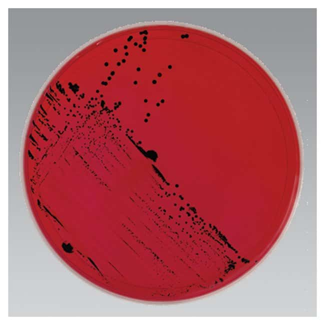 Thermo Scientific Remel XLD Agar (Xylose, Lysine, Desoxycholate) :BioPharmaceutical