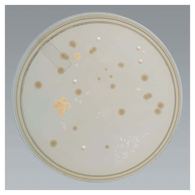 Thermo Scientific Remel Settling Plate Tryptic Soy Agar :Life Sciences:Microbiology