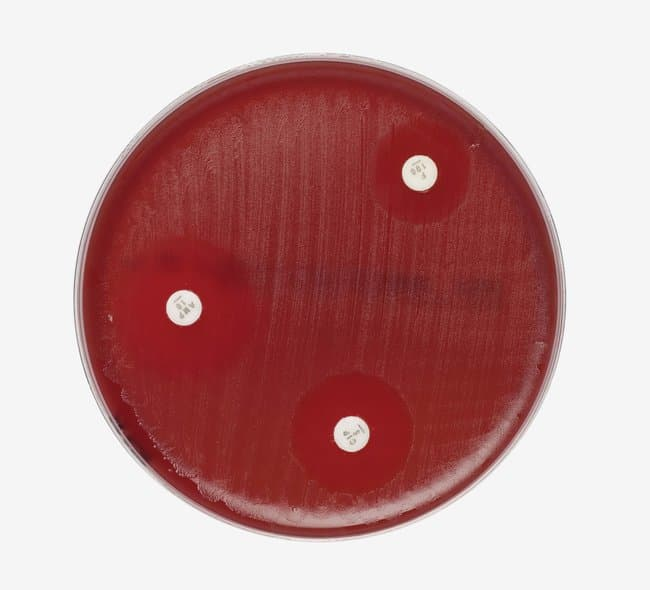 Thermo Scientific™ Mueller-Hinton Agar with 5% Sheep Blood  Products